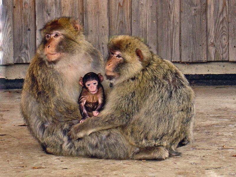 Affen Zoo Freudenberg